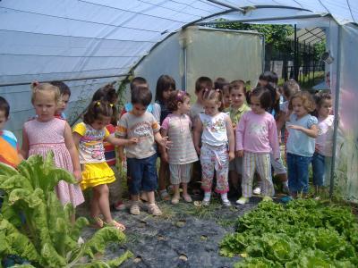 INVERNADERO: UN PROYECTO  SOLIDARIO  EN  EDUCACIÓN  INFANTIL  3
