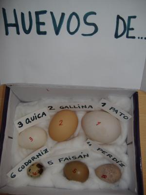 OBSERVANDO HUEVOS  DE  AVES  1